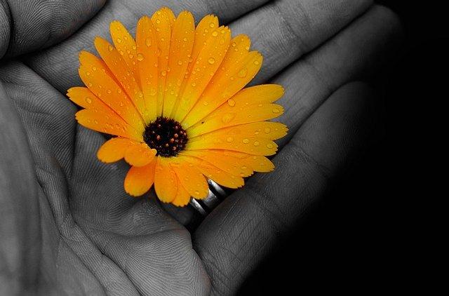 https://www.katarinabradac.cz/wp-content/uploads/2013/04/pg-flowers-72177_640-640x422.jpg